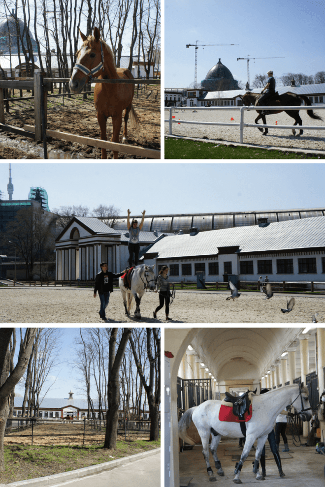 horses at the equestrian centre vdnh moscow