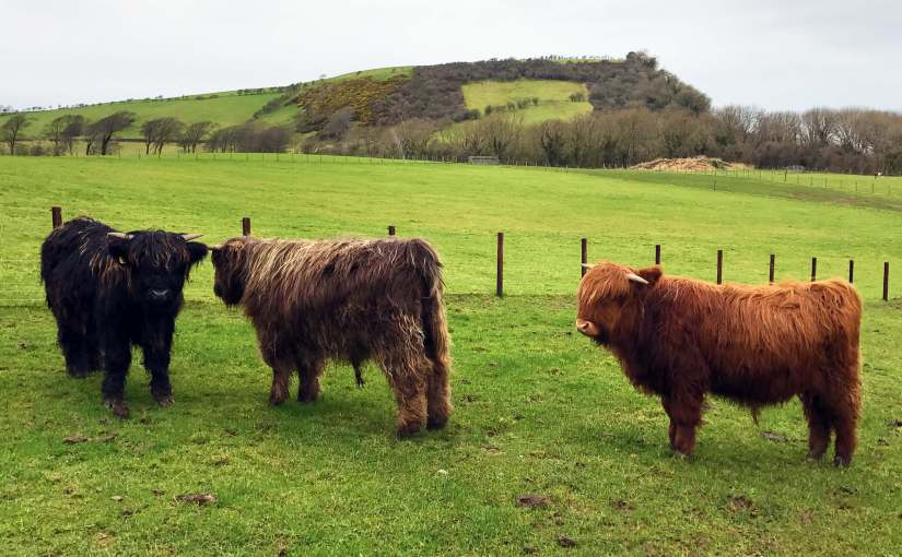 Heads of Ayr Farm Park Highland Cows
