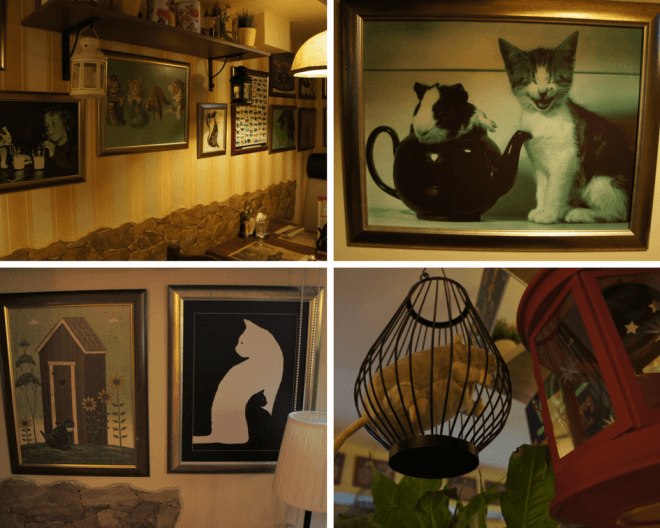 Cats at La Gatta restaurant Moscow