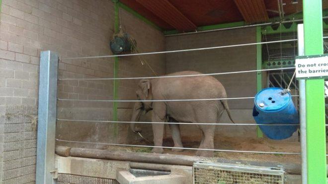 Elephant Belfast Zoo