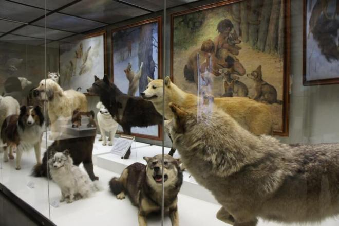 Dogs Darwin Museum Moscow