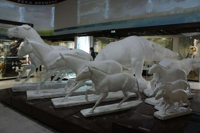 Evolution of horses Darwin Museum Moscow