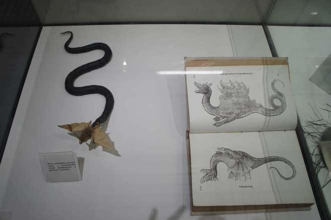 Dragon Darwin Museum Moscow