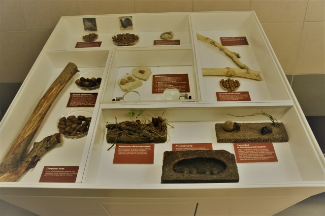 Various types of poo in a case at the Timiryazev Biological Museum