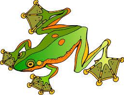 gliding frog image