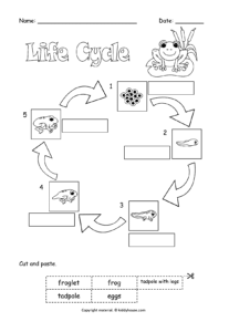 Life Cycle Of A Frog Cut And Paste To Label Kiddyhouse Com