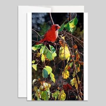 Cardinal & Bittersweet