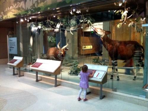 Hall of Mammals