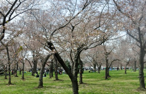 basin_trees_sun