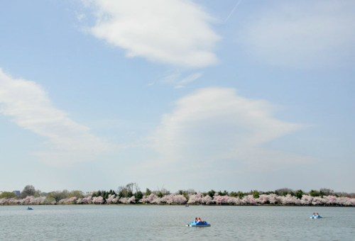 blossoms_basin