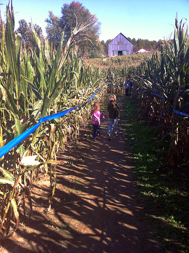 The corn maze at Montpelier Farm is, in a word, EPIC