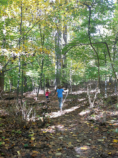 An early autumn walk in the woods at Rock Creek Park