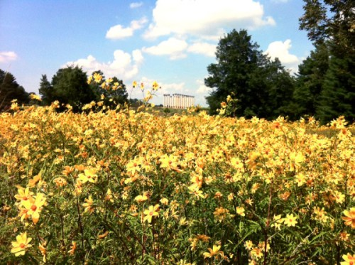 It's going to be a great weekend to visit the National Arboretum