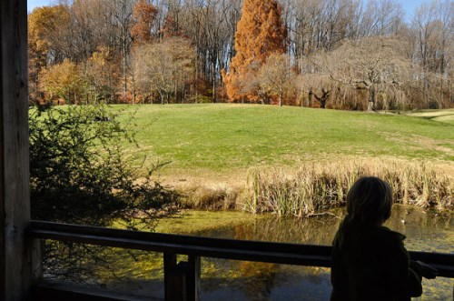 Taking in the autumn scenery at Brookside Gardens