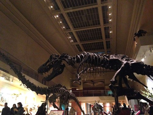 See the dinos at Natural History while you can!  It's closing for a 5-year renovation on April 28.