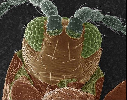 Clovermite gets a close-up