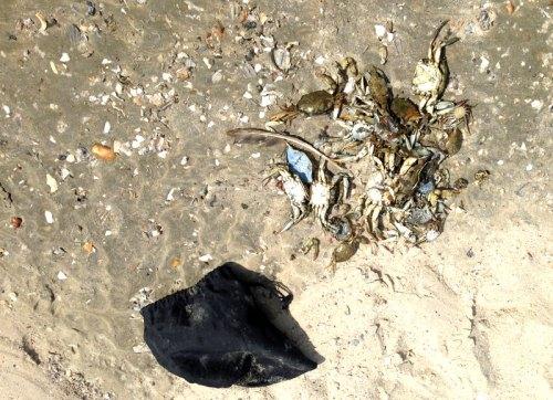 flagponds_crabs