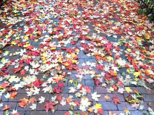 fall_leaves_2015