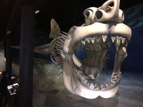 The Megalodon replica is one of many cool highlights at the Calvert Marine Museum