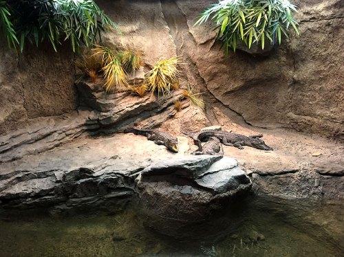 crocs_live