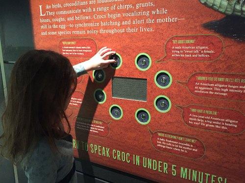 animal close crocs national geographic museum