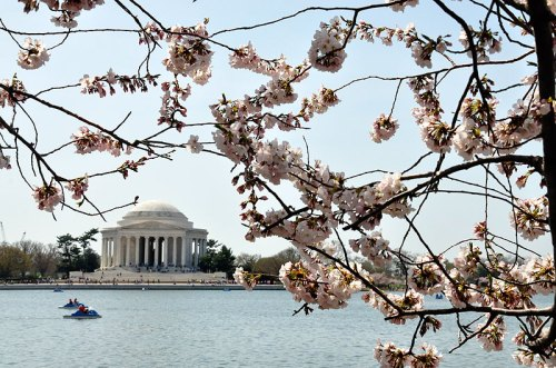 Get a view of the blossoms from the water