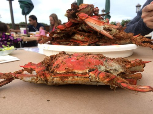 Blue crabs, one of the best treats of the season