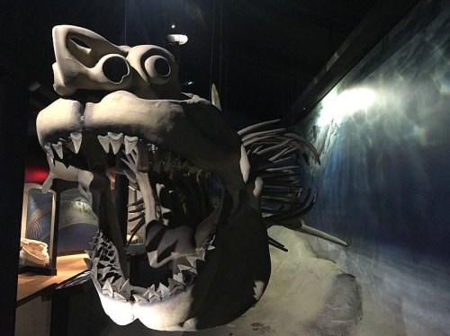 The Megalodon model is one of many cool highlights at the Calvert Marine Museum