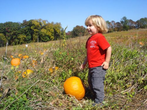 Toddler Owen stakes his claim on a past fall visit to Homestead Farms