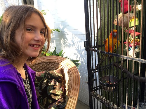 Chat with Rio the sun conure at Buddie Ford Nature Center