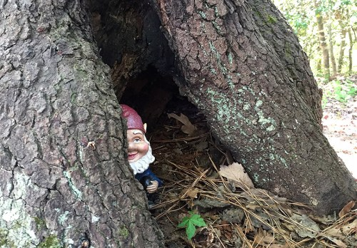 Look out for hidden gnomes at Annmarie Sculpture Gardens
