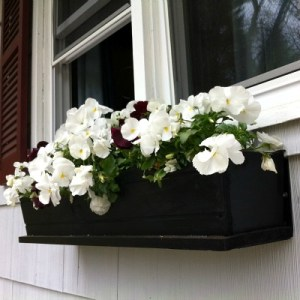 Instant Curb Appeal With A Window Box Full Of Flowers!