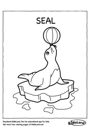 Download Free Seal Coloring Page and educational activity