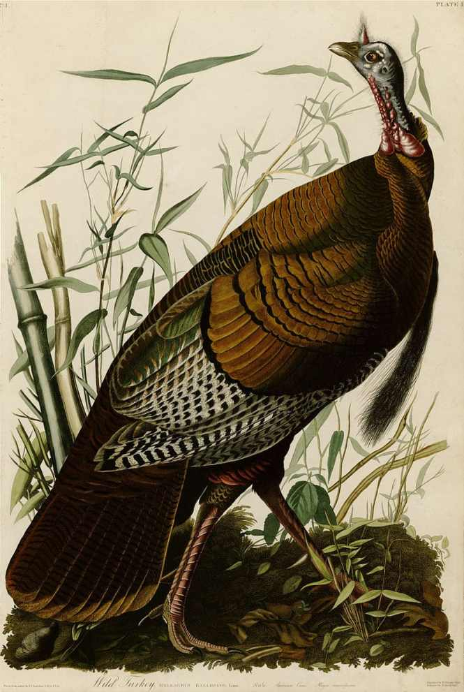 Illinois state bird wikipedia best bird colletion 2018 seal of illinois svg wikimedia mons publicscrutiny Image collections