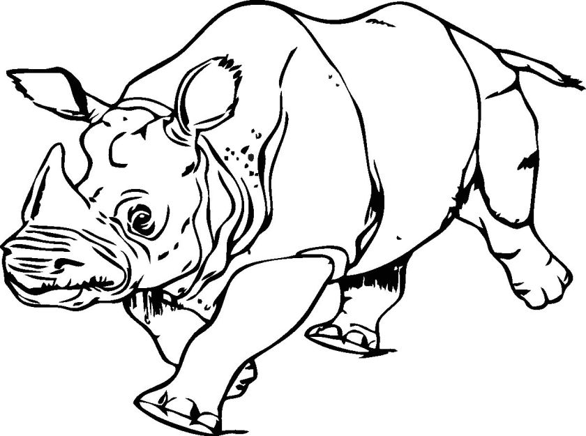 rhinoceros coloring-pages print out