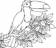 Toucan exotic bird coloring page for jungle bird coloring page
