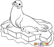 seal colouring pages for kids print out