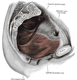 In a trauma, clench those buttocks & maintain pelvic  floor integrity