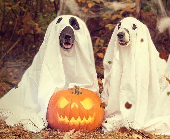 halloween fun facts for kids
