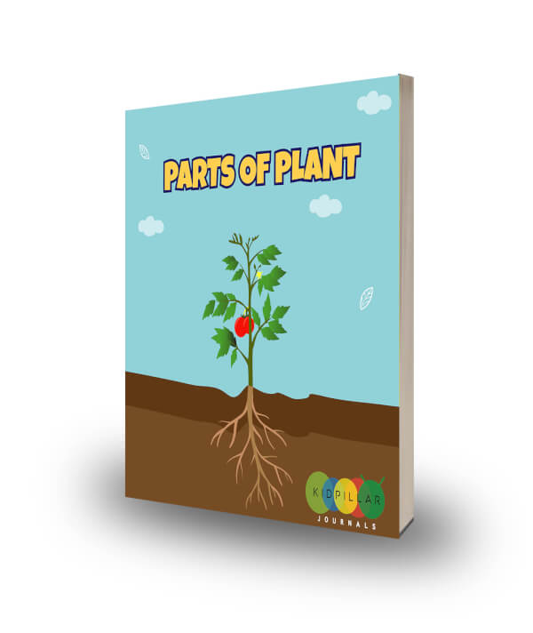 parts of plants for kids