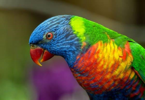 Rainbow coloured animals