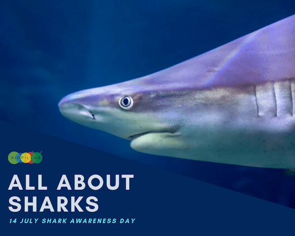 shark facts and stories for kids