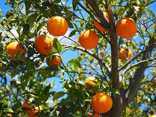 Fruits to Plant with Kids