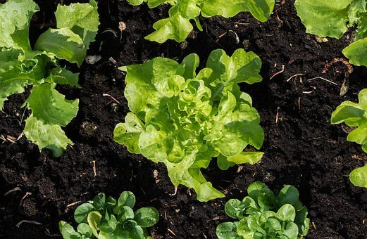 vegetables to plant in home garden