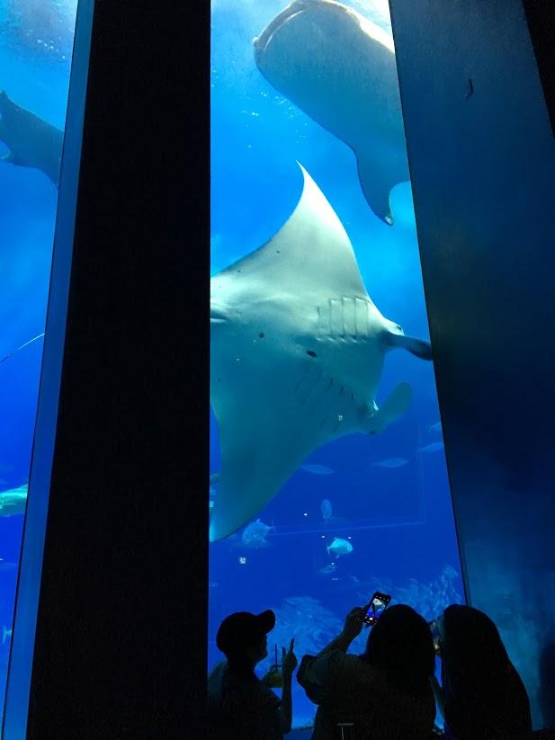 沖縄美ら海水族館の迫力がある大水槽