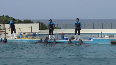 沖縄美ら海水族館のイルカショーの様子
