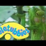 Teletubbies: Chameleons – Full Episode
