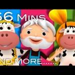 DAISY | BINGO | Plus Lots More Nursery Rhymes | From LittleBabyBum!