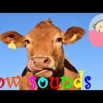 🎧 Cow sounds effect | Cow mooing, growling | Animal sounds for children to learn
