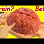 Cutting Open Mr Doh Brain Belly What's Inside